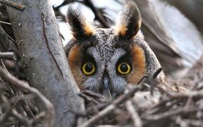 macro, owl