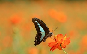 macro, lepidoptera