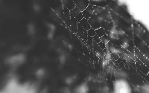 spiderwebs, macro