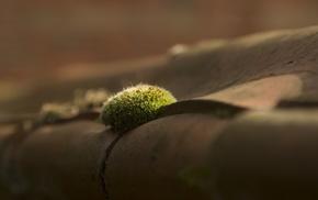 macro, moss, depth of field