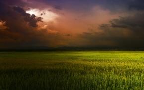 landscape, field, clouds