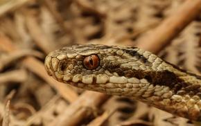 animals, macro, snake