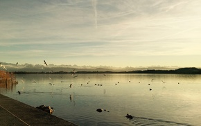water, sunset, horizon, landscape, nature, birds