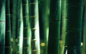 bamboo, sunlight, nature, bokeh, depth of field