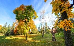 park, plants, trees