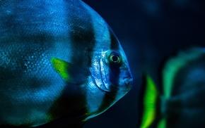 macro, underwater, fish
