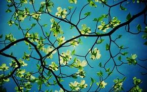 plants, branch