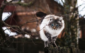 animals, depth of field, fence, blue eyes, twigs, cat