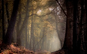 sunlight, morning, France, nature, forest, path