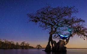 starry night, hammocks, Florida, trees, landscape, lake