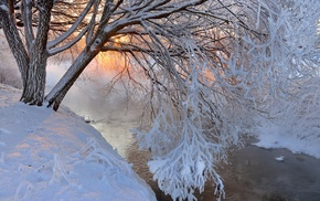trees, landscape, winter, snow