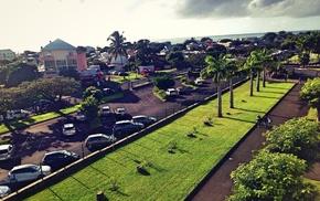 palm trees, street, road
