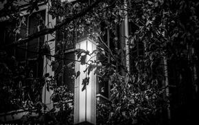 leaves, monochrome, lamp