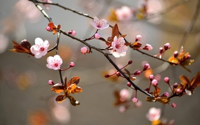 blossoms, branch, depth of field, twigs, flowers