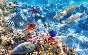 coral reef, coral, animals, underwater, photo manipulation, fish