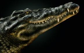 reptiles, crocodiles, animals