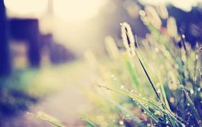 plants, grass, nature, bokeh, depth of field, sunlight
