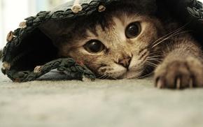 cat, animals, pet, hiding
