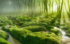 morning, water, mist, moss, green, sun rays