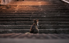 depth of field, animals, stairs, steps, cat