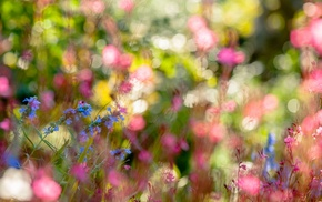 depth of field, flowers, plants, macro, bokeh, nature