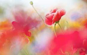 flowers, depth of field, nature, pink flowers