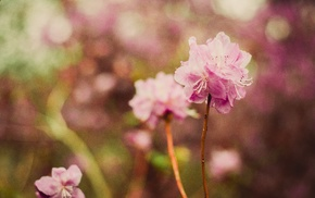 nature, plants, flowers, depth of field, pink flowers