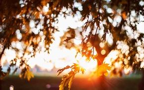 sunlight, leaves, nature, bokeh, depth of field