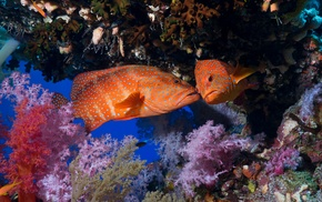 coral, underwater, animals, fish, National Geographic