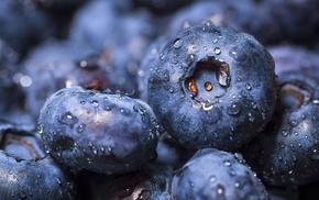 fruit, macro, blueberries, water drops