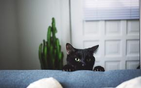 cat, animals, depth of field, black cats, pet