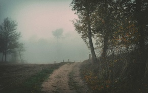 mist, trees, path, nature, dirt road, landscape