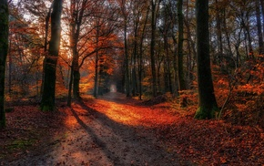 path, fall, trees, nature, leaves, landscape