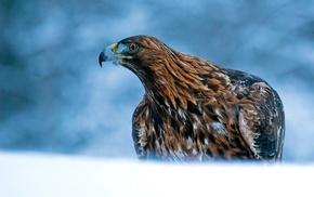 birds, animals, eagle