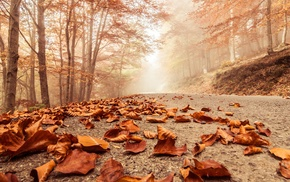 road, fall, trees