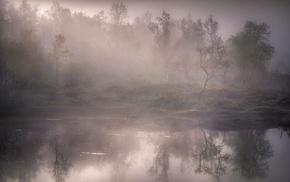 forest, mist, nature, landscape, lake, reflection