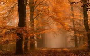 landscape, fall, Netherlands, amber, path, dirt road