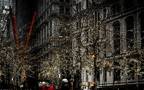 trees, New York City, Zuccotti Park