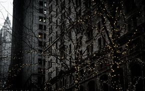 New York City, trees, Zuccotti Park