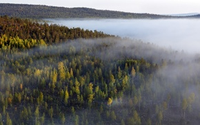 trees, forest, nature, mist, lake