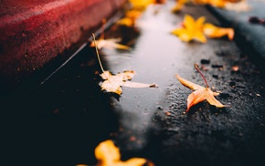 fall, on the floor, leaves, maple leaves