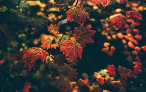 depth of field, leaves, filter, fall, nature