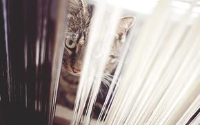 cat, animals, blinds, depth of field