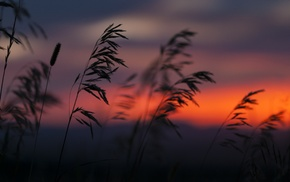 nature, silhouette, plants, sunset, reeds
