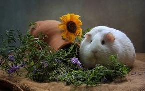 wisteria, animals, mammals, sunflowers, guinea pigs, flowers