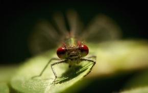 insect, plants, macro