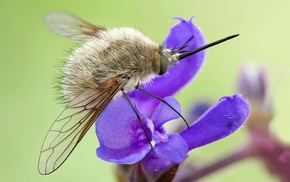 insect, flowers, macro, purple flowers