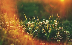 grass, depth of field, plants, sunlight, flowers
