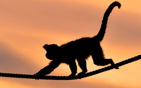 animals, ropes, monkey, silhouette