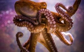 animals, octopus, bokeh